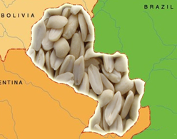 парагвайский арахис купить