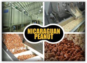 арахис из Никарагуа. Цены производителя.
